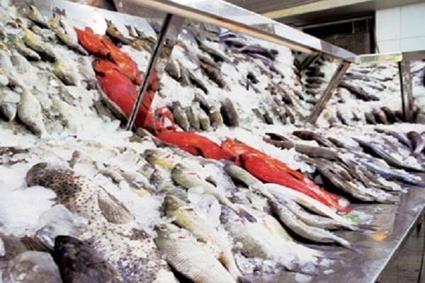 الحكومة: لا صحة لما تردد عن استيراد أسماك غير صالحة للاستهلاك